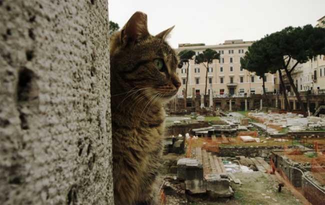 gatti largo argentina